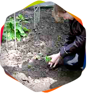 услуги растениевода в Москве.