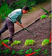 Услуги садовода в Москве